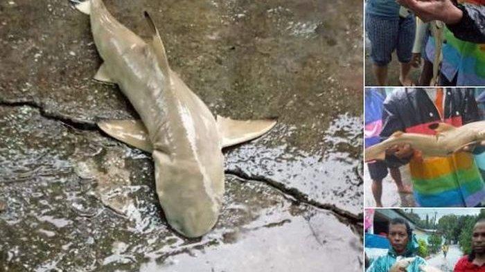 Hiu Air Tawar Sentani yang Muncul Saat Banjir Hanya Satu dari 71 Spesies Ikan Ajaib di Papua