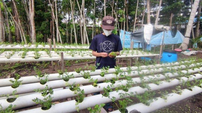 Kisah Sukses Anto Warga Karimun Menanam Sayuran Hidroponik, Berawal dari Hobi