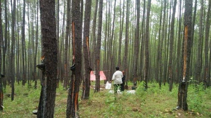 Termakan HOAKS, Warga Lari dan Sembunyi di Hutan Takut Divaksin Covid-19