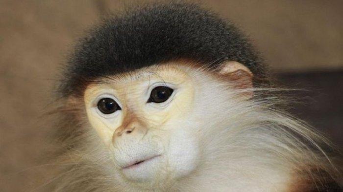 LIVE FACEBOOK Saat Bantai & Makan Otak Monyet Karena Ingin Pintar, Begini Nasib 3 Pria di Vietnam