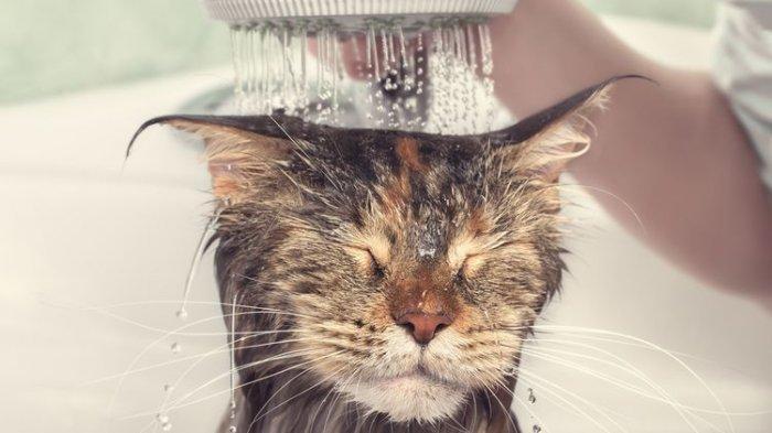 Arti Mimpi Memandikan Kucing Menurut Primbon, Benarkah Ada Pertanda dari Yang Maha Kuasa?