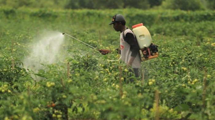 Agriculture War Room Assessed Can Help Agricultural Extension In Empowering Farmers