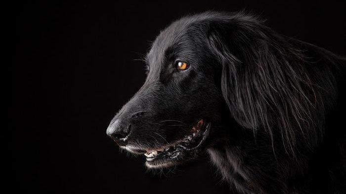 Arti Mimpi Digigit Anjing Ada Pertanda Buruk, Waspada dengan Perselingkuhan hingga Adanya Aura Jahat