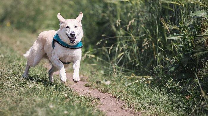 Arti Mimpi Dikejar Anjing Menurut Primbon, Pertanda Alami Masalah hingga Temukan Jalan Keluar