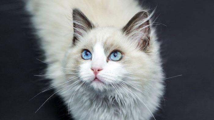 Kucing Kesayangan Kamu Digigit Ular? Ini Pertolongan Pertama yang Harus Dilakukan