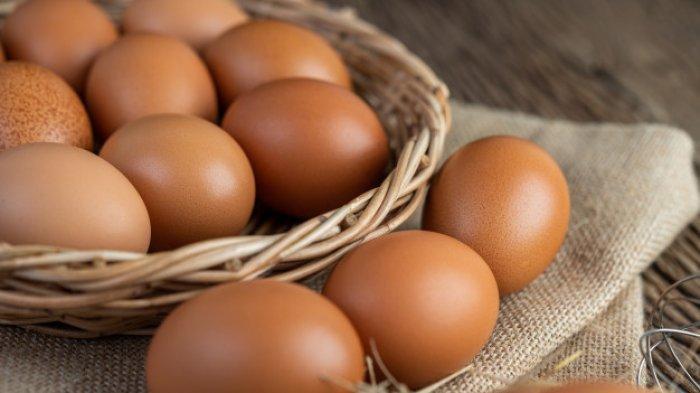 FOTO: ILUSTRASI telur