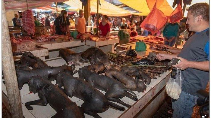 Ilustrasi pasar ekstrem Tomohon di Indonesia yang mirip pasar Wuhan yang menjual makanan tak wajar