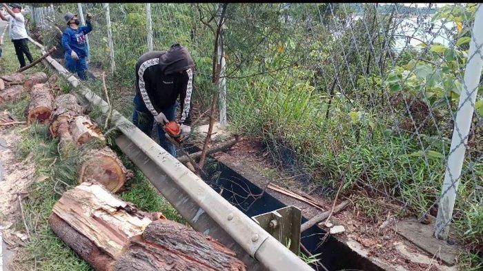 Pekerja membersihkan puing-puing pohon tumbang di sekitar jalan akses waduk Sei Ladi, Kota Batam, Provinsi Kepri, Senin (15/6/2020).