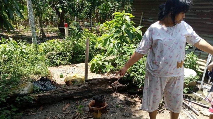 HEBOH Penemuan Bunga Bangkai di Tanjungpinang, Warga Curiga dari Bau Busuk
