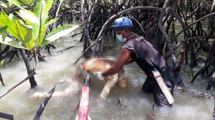 Penemuan Mayat di Karimun, Bujang Curiga Bau Menyengat di Pohon Bakau saat Cari Udang
