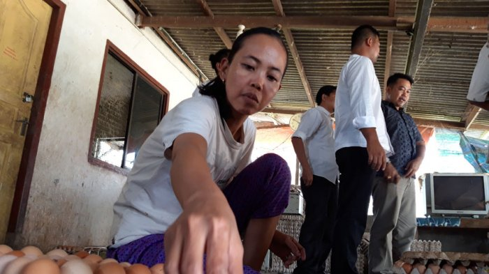 Harga Jual Telur Melonjak, Peternak Bintan Diminta Tidak Lepas Telur ke Batam