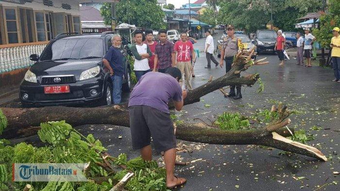 Pohon Tumbang di Jalan Sumatera Tanjungpinang Senin Pagi, Akses Jalan Sempat Tertutup