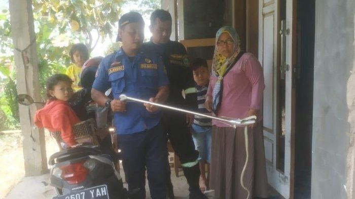 Warga Dikagetkan Dengan Kemunculan 2 Ekor Ular Berbisa di Rumahnya, Pemilik Rumah Sempat Kelabakan