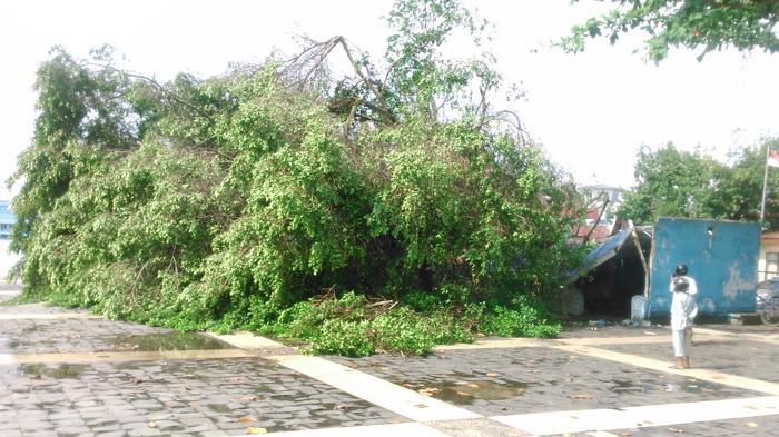 Bagaimana Aturan Hukum Jika Pohon Tetangga Tumbang dan Menimpahi Teras Rumah Saya?
