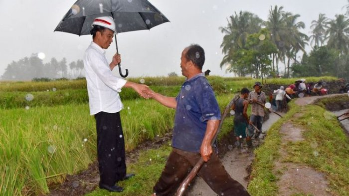 Di Tengah Hujan Deras, Jokowi Datangi Pekerja yang Sedang Bikin Saluran Irigasi di Tanah Datar