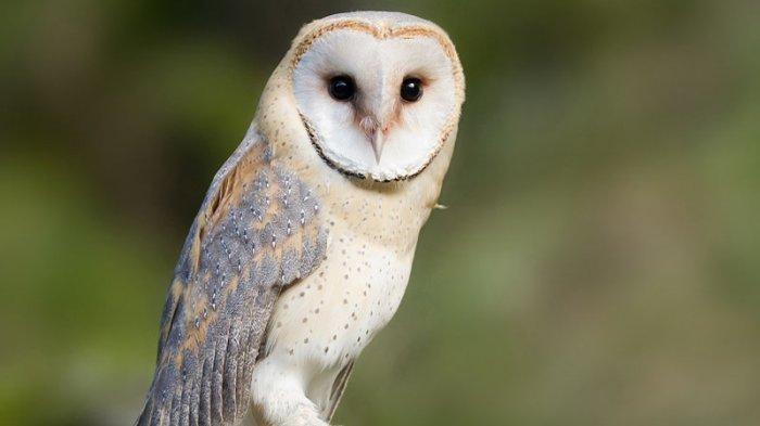 Jarang Terjadi Ini Arti Mimpi Menembak Burung Menurut Primbon Pertanda Perkara Atau Berkah Tribun Batam