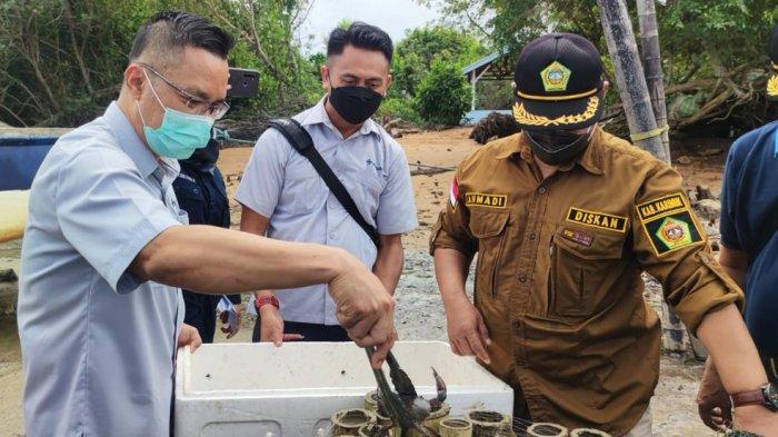 PT Timah Serahkan 1000 Ekor Bibit Kepiting untuk Pokdakan Tuah Ketam