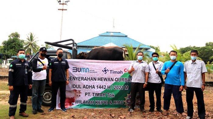 PT Timah Tbk Bagikan 32 Ekor Hewan Kurban di Kepulauan Riau dan Riau