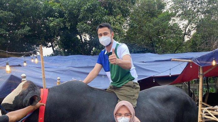 Daftar Artis Indonesia Ini Beli Sapi Ukuran Besar untuk Idul Adha, Bobot Lebih dari 1 Ton
