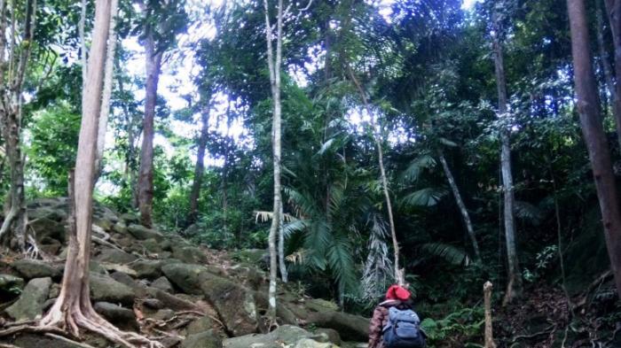 Ayo Berwisata Ke Satu Satunya Gunung Di Bintan Dan Nikmati Keindahan Alamnya Tribun Batam