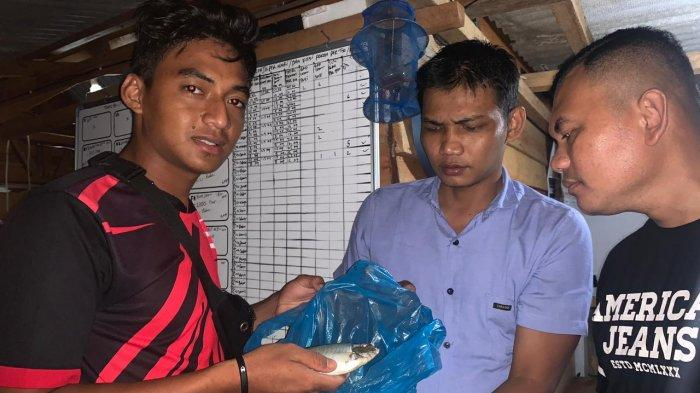 Seorang nelayan Pulau Setokok, Kota Batam, Zainal saat menunjukkan Ikan Dingkis hasil tangkapannya, Sabtu (13/2) malam.