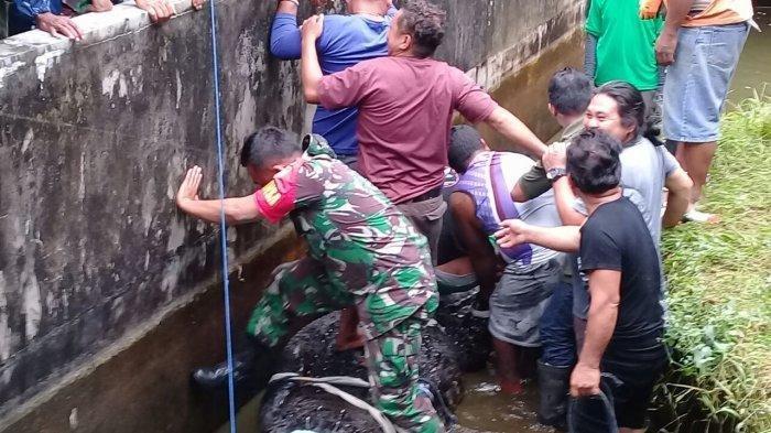 Cerita Anggota TNI Serda Arsyad yang Evakuasi Buaya Pemakan Manusia: Merasa Waswas Hingga Gigi Copot