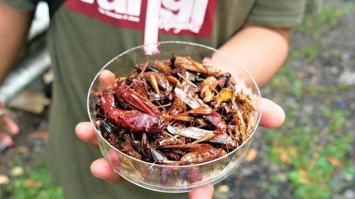 Ekstrem! Inilah 5 Kuliner Berbahan Dasar Serangga di Berbagai Negara, Indonesia Juga Punya