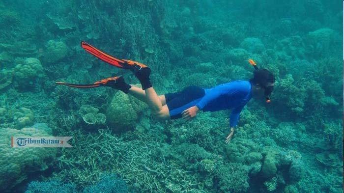 Potensi Diving di Anambas Bakal Bisa Sejajar dengan Raja Ampat. Ini Kelebihan Bawah Lautnya