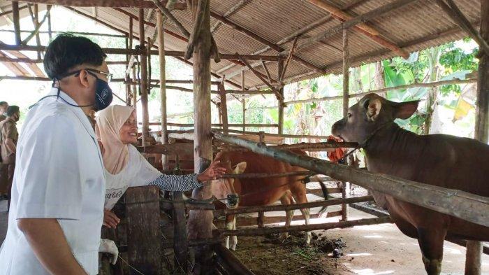 Petugas DKPP Bintan mengecek kondisi kesehatan hewan kurban di wilayah Bintan. Pihaknya memberi tips kepada warga yang ingin membeli hewan kurban yang aman jelang Idul Adha 1441 H.