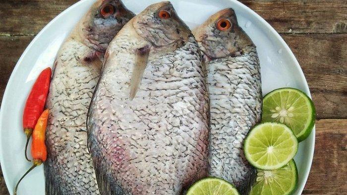 4 Tips Memilih Ikan Gurame Segar dan Berdaging Tebal