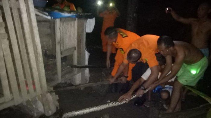 Bikin Geger, Ular Piton Muncul di Kandang Ternak Warga Tanjungpinang, 2 Ekor Ayam Jago Habis Dilahap