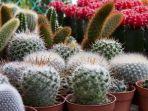 0609_kaktus-mini.jpg