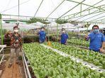 1211xl-smart-hydroponics.jpg