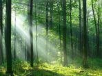 14-2-2021-ilustrasi-hutan-ilustrasi-hutan.jpg