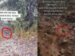 20-2-2021-viral-kisah-pendaki-tersesat-di-gunung-lawu-dituntun-seekor-burung-jalak.jpg