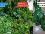 24122020_viral-video-anggota-bnn-ambil-tanaman-hias-dari-hutan.jpg