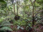29-8-2020-ilustrasi-hutan.jpg