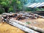 Ilegal-Logging-di-Bintan.jpg