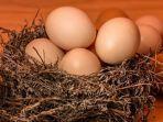 arti-mimpi-melihat-telur.jpg