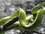 arti-mimpi-menangkap-ular.jpg