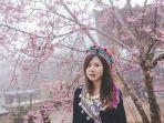 bunga-sakura-di-khun-chang-khian-thailand.jpg