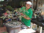 cerita-penggila-bonsai-dari-tanjungpinang.jpg