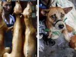 festival-makan-daging-anjing.jpg