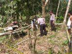 hendak-tumbang-pohon-warga-pelalawan-ini-tewas-tertimpa-pohon.jpg