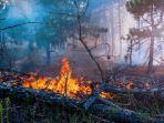 hutan-gunung-slamet-terbakar.jpg