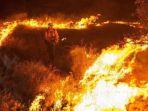kebakaran-hutan-di-sydney_20180416_161231.jpg