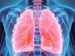 membersihkan-paru-paru.jpg