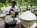 petani-melon-jepang-di-malaysia.jpg