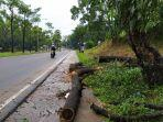 pohon-tumbang-di-jalan-yos-sudarso-depan-kodim-0316-batam.jpg