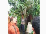 ra-jambet-diikat-warga-di-pohon-mangga_20170104_152046.jpg